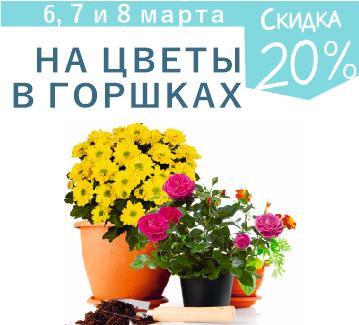Цветов доставка корона бобруйск, магазин цветы высоково кострома
