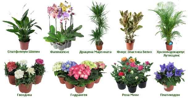 Какие есть комнатные растения и цветы